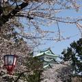 写真: 20110406名古屋城(桜) (4)