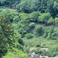 Photos: 嵐山50