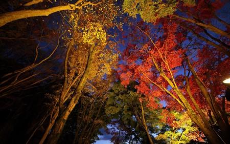 笠置山自然公園アイトアップ06