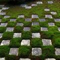 Photos: 東福寺・方丈庭園15