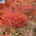 Photos: 東福寺・方丈庭園10