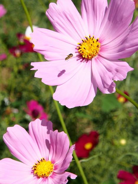 ミツバチ接近中