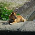 写真: 襲ってきた犬