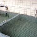 写真: 西郷どんの湯 日当山温泉 共同湯 4 250円