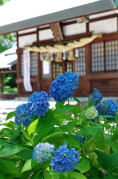 あじさい神社(1)