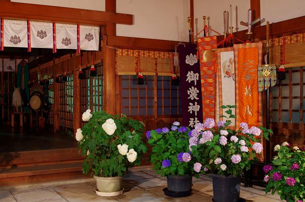 夜の紫陽花神社(3)