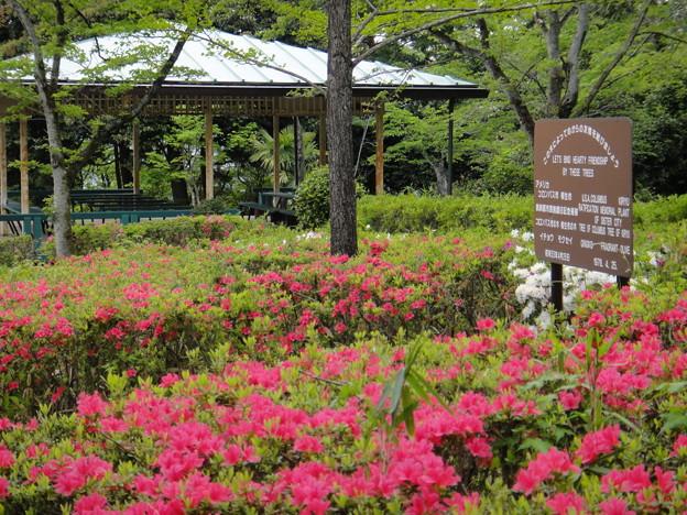 写真: 水道山公園