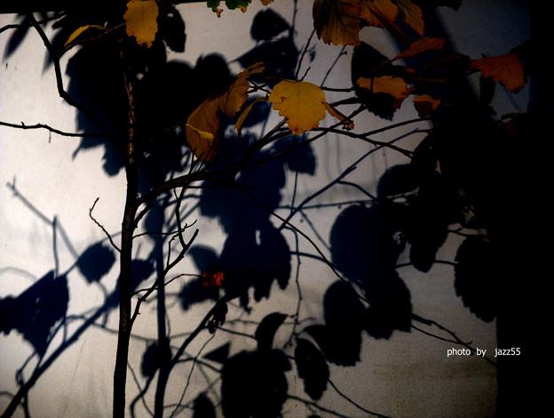 黄葉 シャドウ