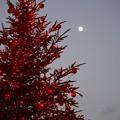お月様とXマスツリー