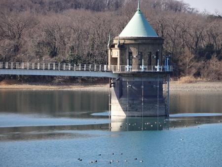狭山湖とムーミンの家と水鳥