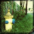 Fire Hydrant and Morning Glory 9-1-12