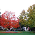写真: Maple in the Mall 10-5-12