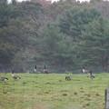 Geese taking a Break 10-15-12
