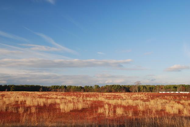 Photos: Blueberry Fields 11-1-12