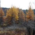 Golden... 11-3-12