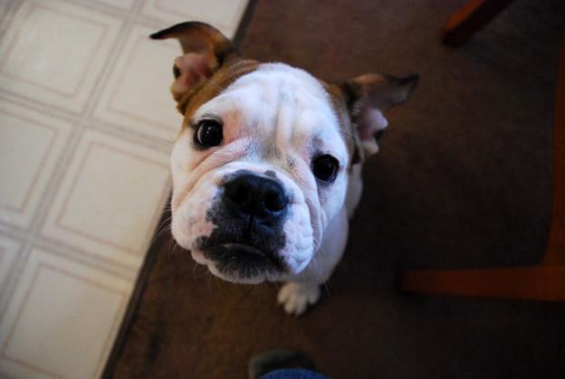 Daisy THE DOG 12-1-12