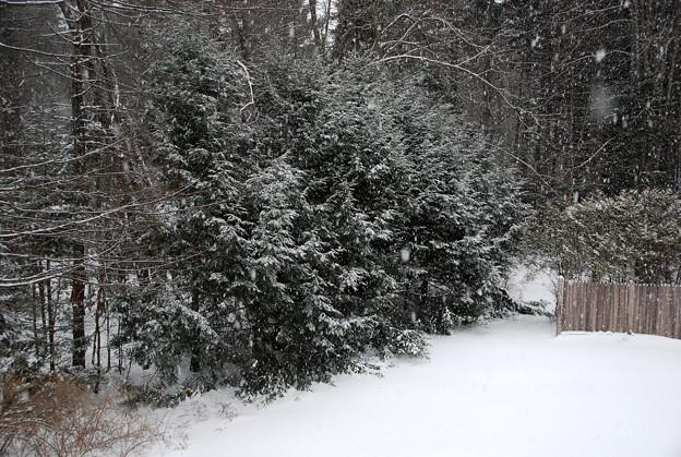 写真: Snowing 12-29-12