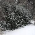 Snowing 12-29-12
