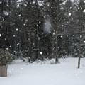 写真: Snowy Backyard 12-29-12