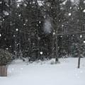 Snowy Backyard 12-29-12