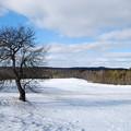 Photos: A Tree under the Sky 12-31-12