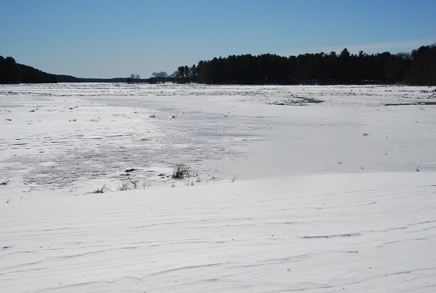 Thomas Point Salt Marsh 2-10-13