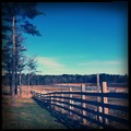 The Fence and the Pine Trees 2-2-13