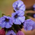 Photos: Spring 4-22-13