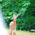 Bambi 6-16-13