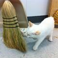 Maxine Eats the Broom 7-27-13