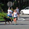 Photos: The First Dog 8-24-13