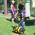 Bumblebees 8-24-13