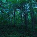 Raining Forest 9-2-13
