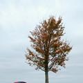 Photos: A Red Car 10-5-13
