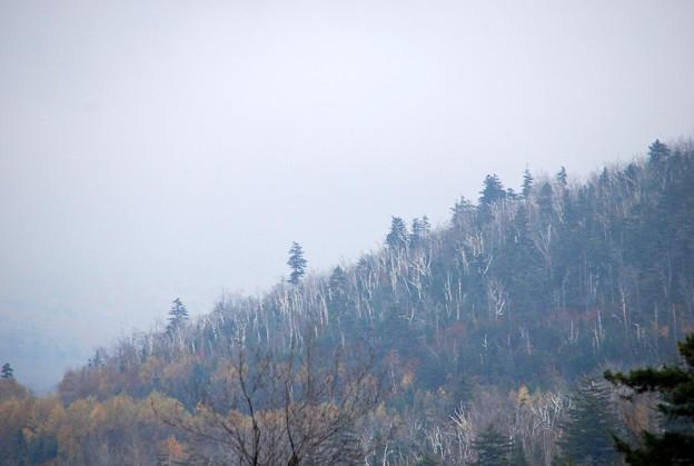 In the Fog 10-12-13