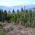 Fallen Trees 10-12-13