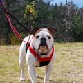 Daisy's Portrait 10-12-13