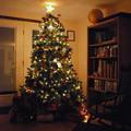 写真: Christmas Tree 2013