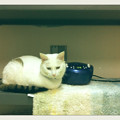 写真: Kelsie Enjoys Music 2-1-14