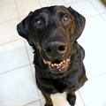 写真: Jett the Dog 3-7-14