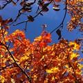 写真: 紅葉と青