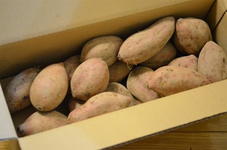 国華園安納芋(通常品) (2)
