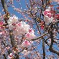 Photos: 花の姿 (19) 2013年 2月