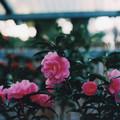 Photos: 花の姿 (21) 2013年 3月