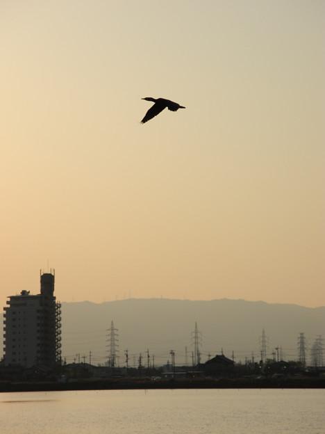 Photos: 鳥の景色 (9) 2013年 4月