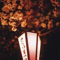 Photos: 花の姿 (25) 2013年 4月