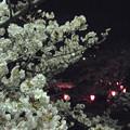 Photos: 花の姿 (26) 2013年 4月