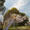 Photos: 花の姿 (31) 2014年 4月
