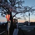 Photos: 花の姿 (32) 2014年 4月