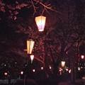 Photos: 花の姿 (33) 2014年 4月